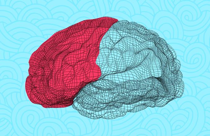 cerebro-1.png