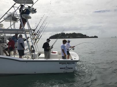 Animal - Tarpon Fishing in Trinidad - Sp
