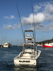 Animal - Sport Fishing in Trinidad and T
