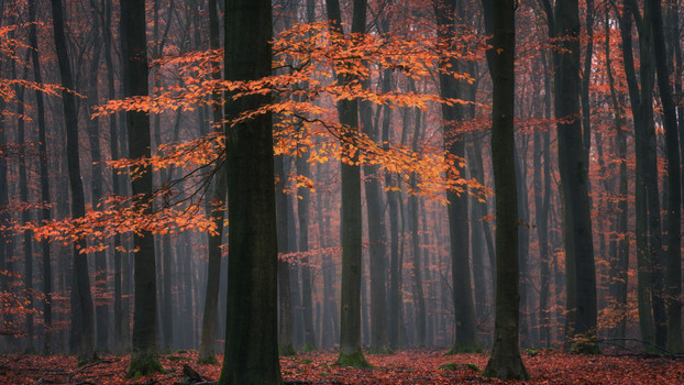 A Morning in the Dutch Forest