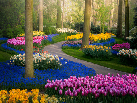 The Most Beautiful Flower Garden in the World, Without People