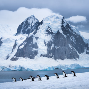 Penguin Polonaise