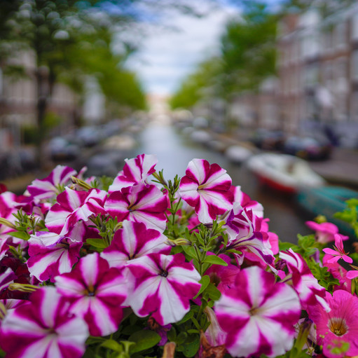 Amsterdam3_small
