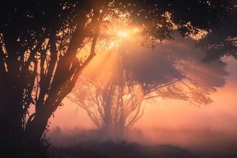 light explosion.jpg