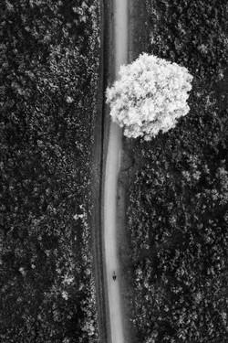 1 road 1 tree