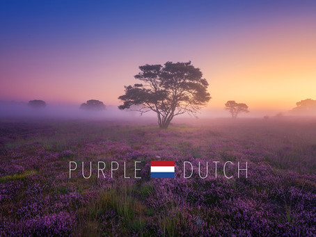Purple Dutch