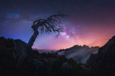Madeira Nights