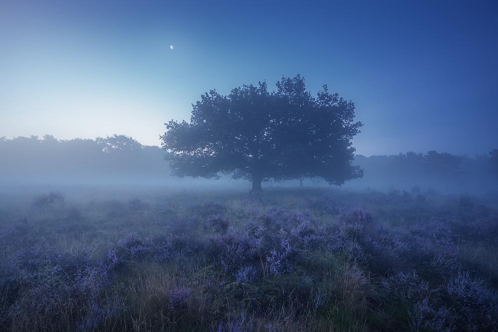 Purple Dutch by Albert Dros