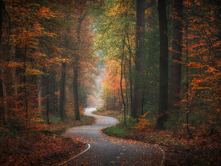 Golden Autumn in the Netherlands