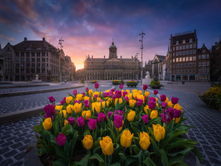 Tulips at the Dam Square