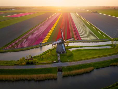 Tulip Season 2019
