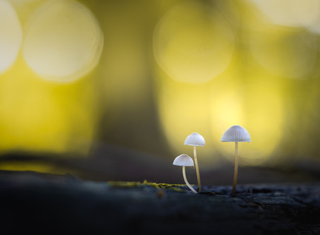 10 Tips for Photographing Mushrooms in the Forest