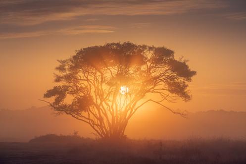 Dutch Africa