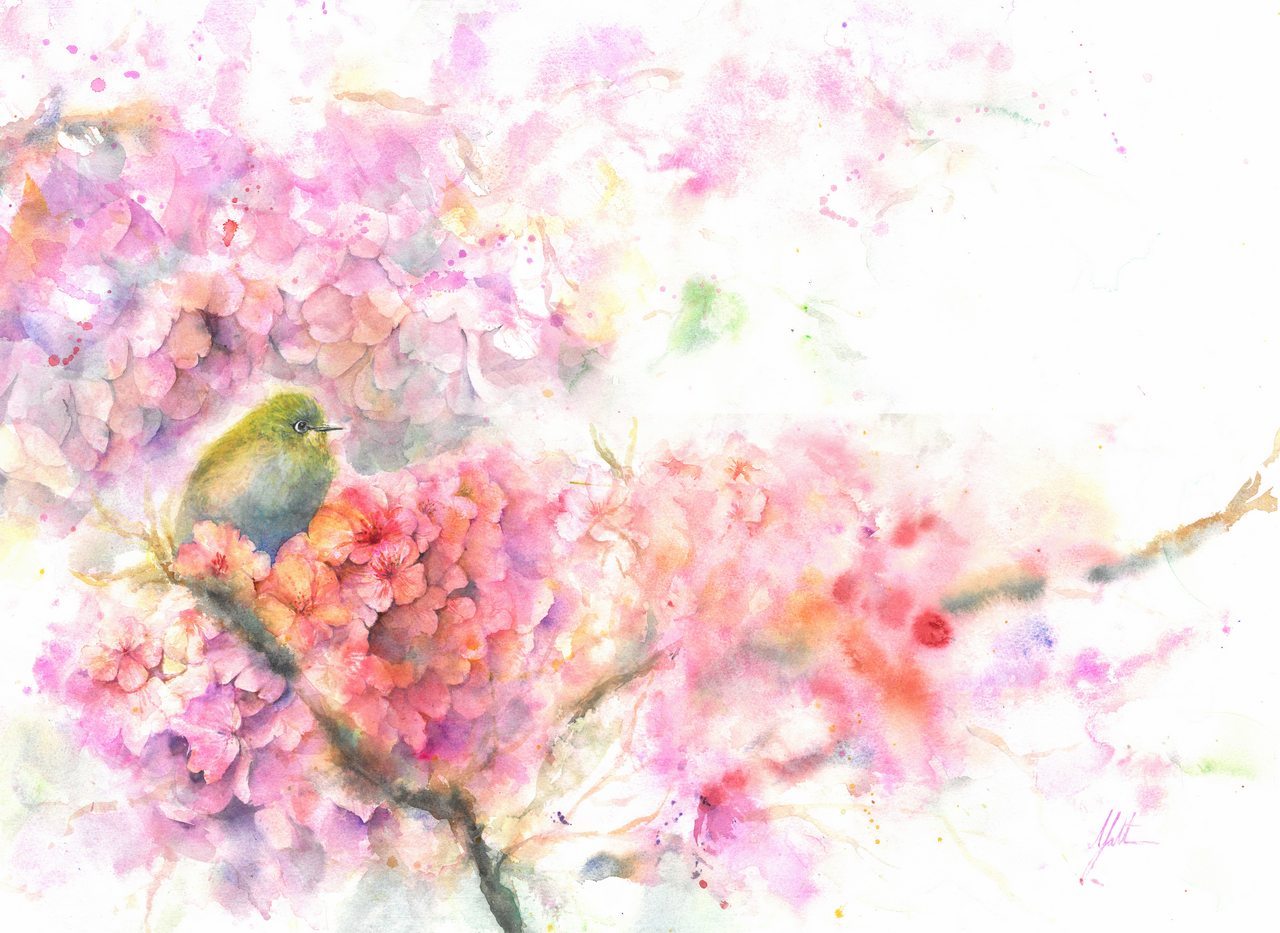 Japanese White Eye in blossom plum.png