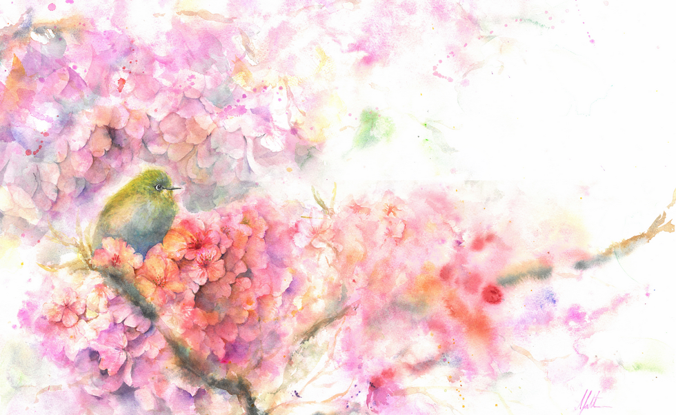 Japanese White Eye in blossom plum.png