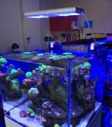 Luminária de led wif para aquarios