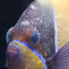 As principais doenças em peixes marinhos.