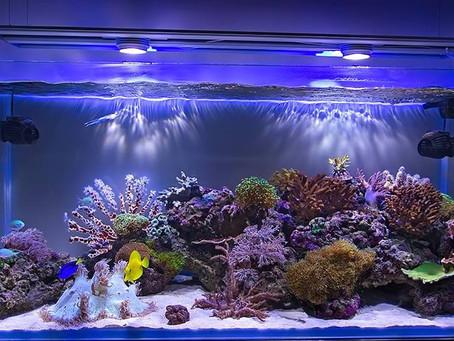 Circulação em aquários
