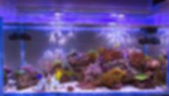 acquapro importadora e distribuidora de produtos para aquario