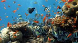 Fotos corais e peixes