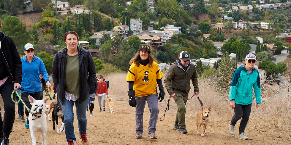 Group Pack-Walk - How To Transform Your Walks Through Dog Psychology