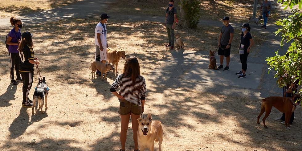 Group Pack-Walk