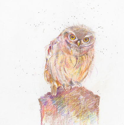 Iden - Little Owl 29x31cm