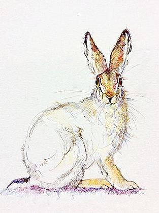 Lufian - Mountain Hare