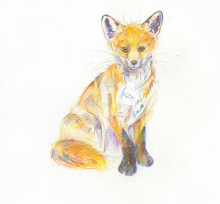 Alice - Young Fox 32x30cm
