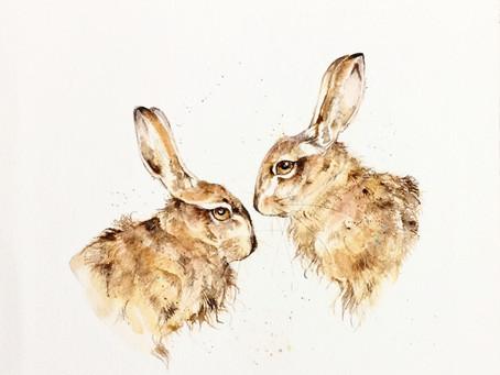 The European Brown Hare (Lepus Europeaus)