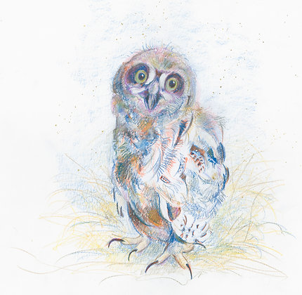 Ookpik - Young Snowy Owl 31x29cm