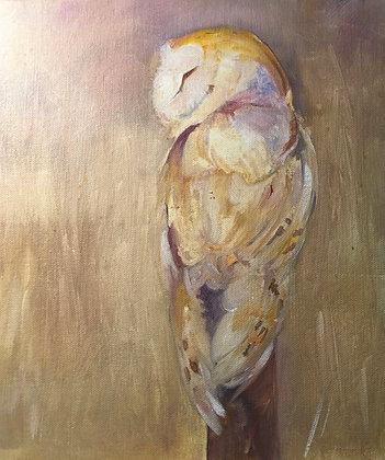 SOLD Evening - Barn Owl