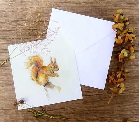 Beatrice Red squirrel greetings card pack of 4
