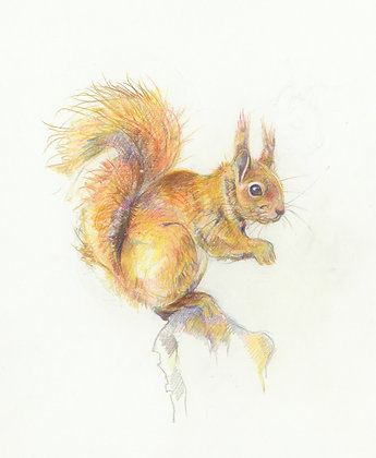 Beatrice - Red Squirrel