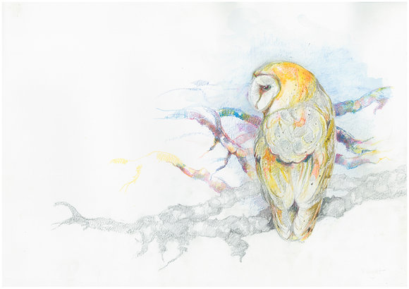 Otha - Barn Owl