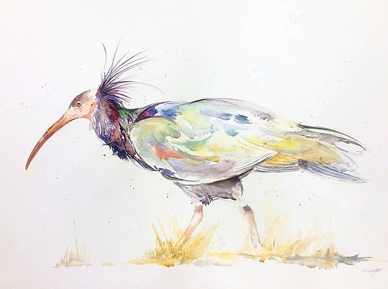 Eric -  Northern Bald Ibis