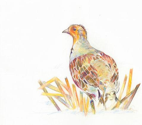 Minna - Grey Partridge 32x29cm