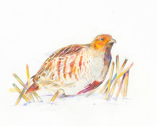 Hettie - Grey Partridge 32x30cm