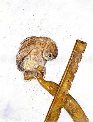 Freya - Little Owl on Farm Machinery