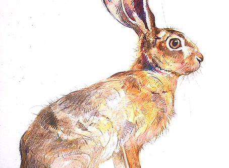 Spring Hare Madness