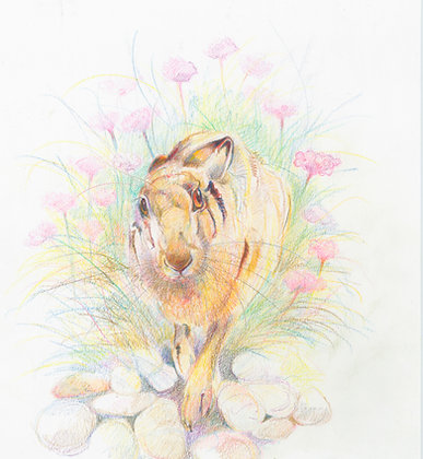 Cynefrith - Young Hare on Chesil Beach 29x23cm