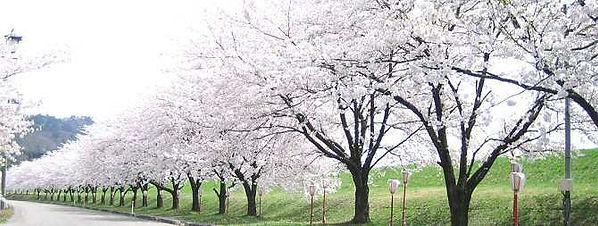 ofificial_mage_murakami_4.jpg