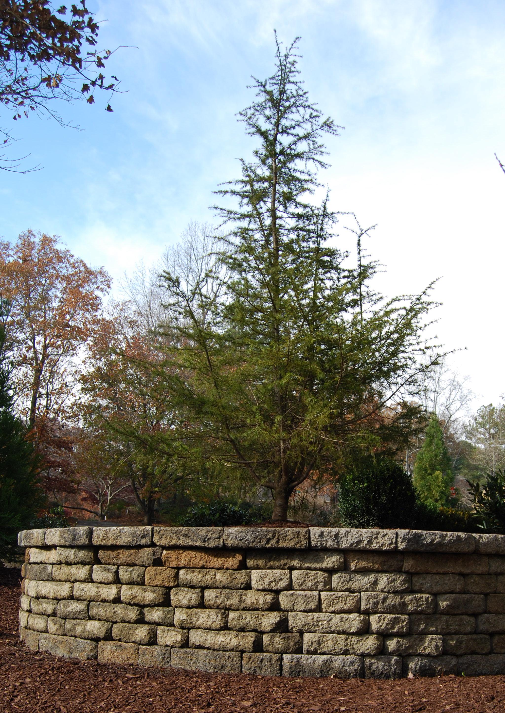 Noland Wall
