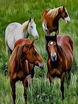 Horses #1.jpg