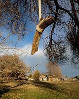 Stick in Tree.jpg