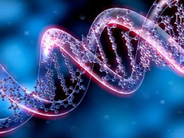 Deep Belief : La biologie des croyances