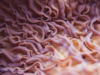 Qu'est-ce que la neuro plasticité ?