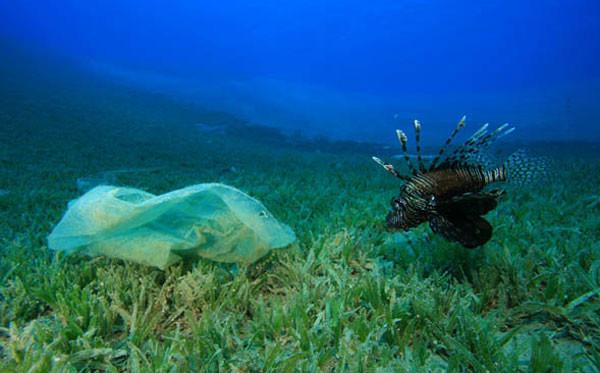 INVENTÁRIO APONTA QUANTIDADE DE MICRO-PARTÍCULAS PLÁSTICAS FLUTUANTES NOS OCEANOS