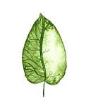 floralgreenerycollection-09.png