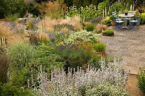 Andy's garden